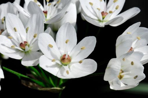 ユリ科なんで6弁花です。