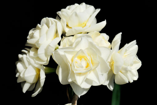 花はお互いにもたれ合ったりはしてません。
