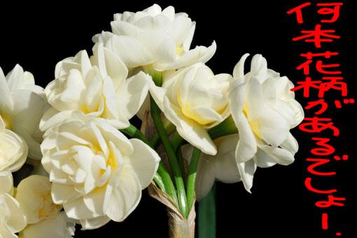花茎もワイヤー並みの固さです。