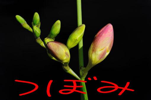 花茎に近い方から咲いてきます。