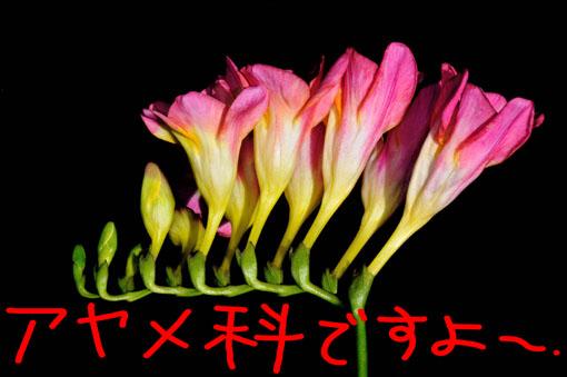 編んだみたいな花茎