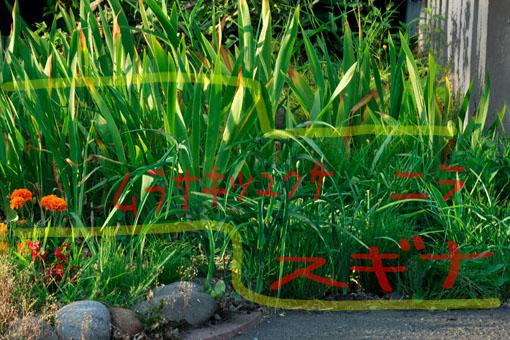 草まみれの一角です。