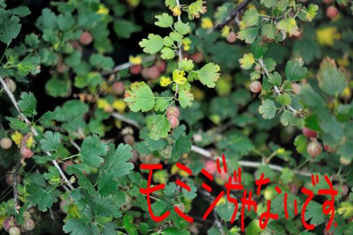 秋にゃ~葉っぱが色付くらしーです。
