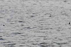暫く見てると湖水にドボンしたりします。