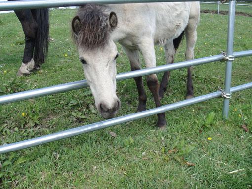 食欲も旺盛なお馬さんです。
