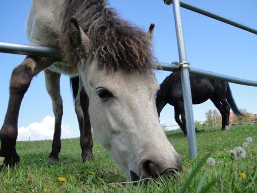 お馬さんです~♪