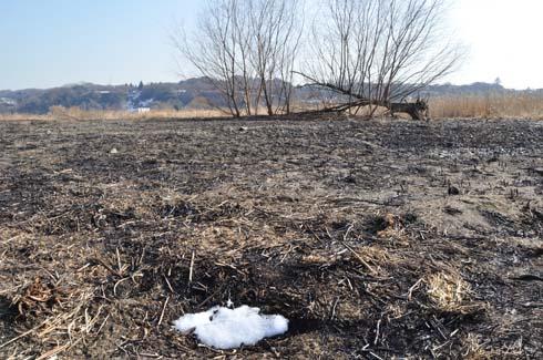焼け野原に残雪です。