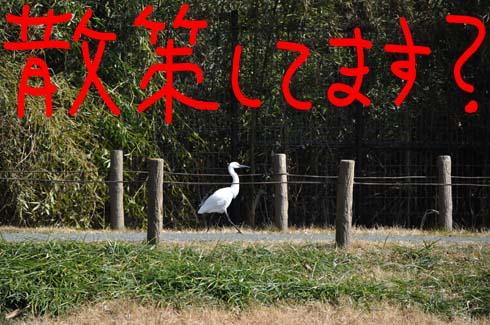 散歩中 (?_?)