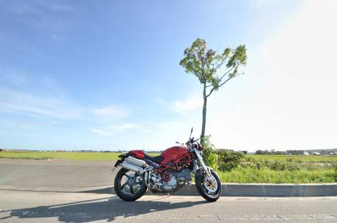 ナナカマド(バラ科)の木です。タブン